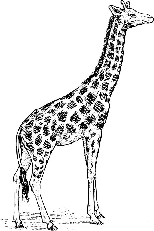 Coloriages à imprimer : Girafe, numéro : 754218