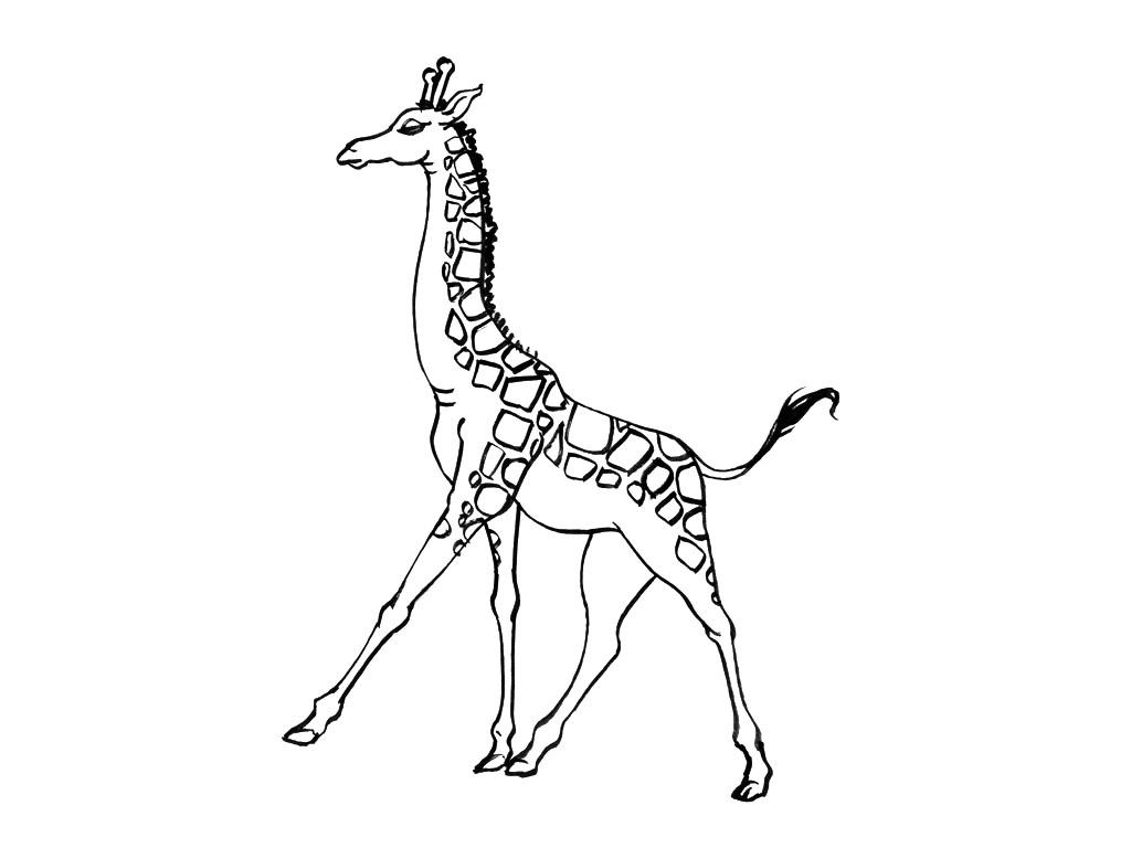 Coloriages à imprimer : Girafe, numéro : 754224