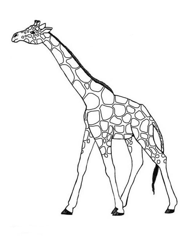 Coloriages imprimer Girafe