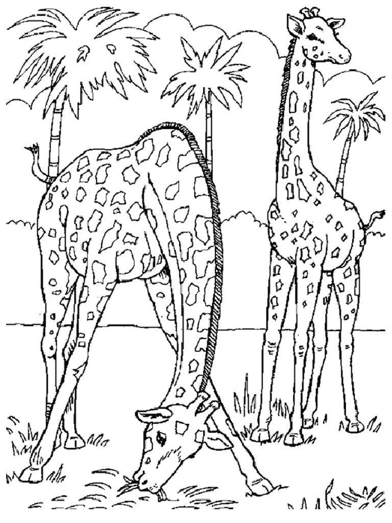 Coloriages à imprimer : Girafe, numéro : 7701aa75