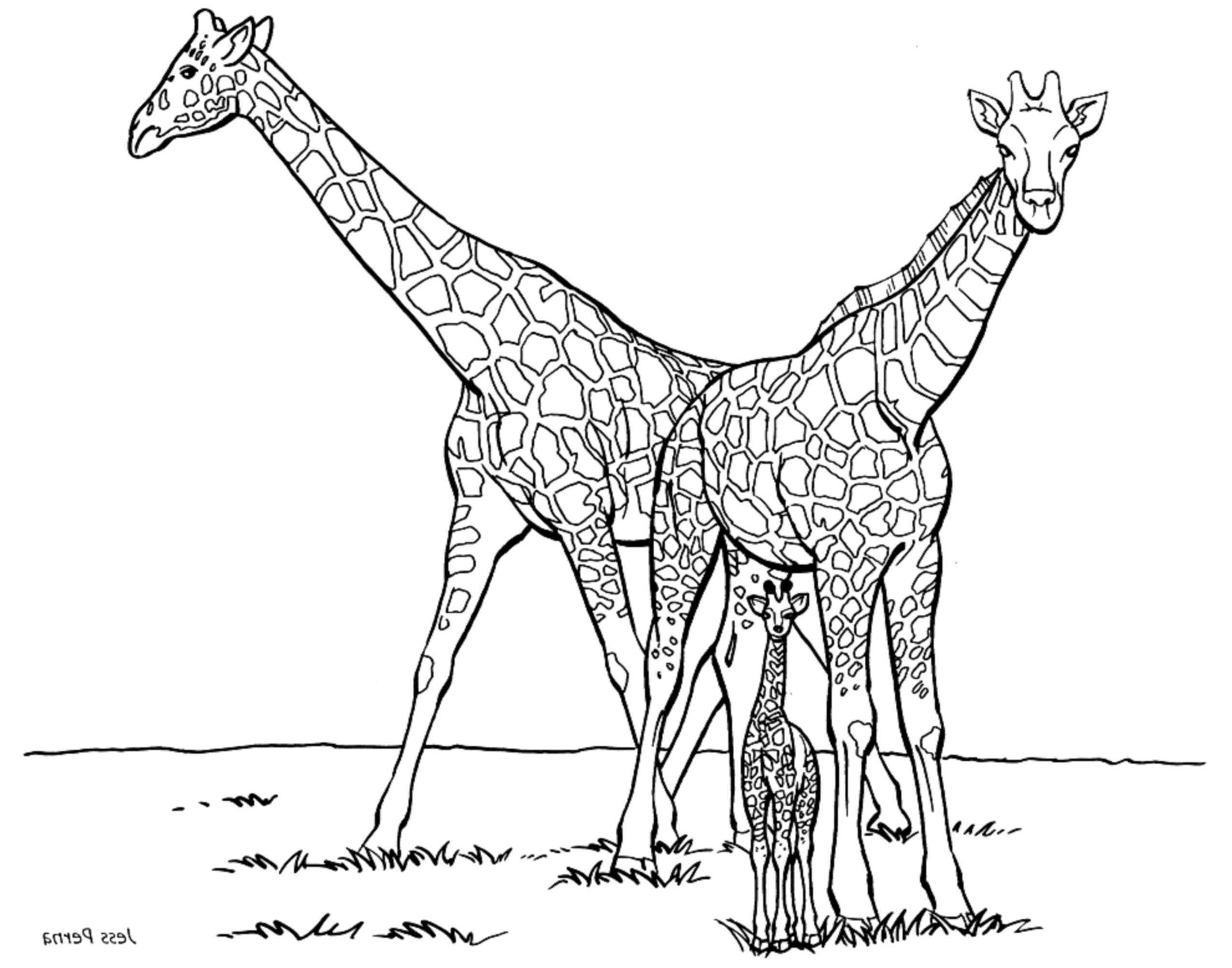 Coloriages à imprimer : Girafe, numéro : a2650f38