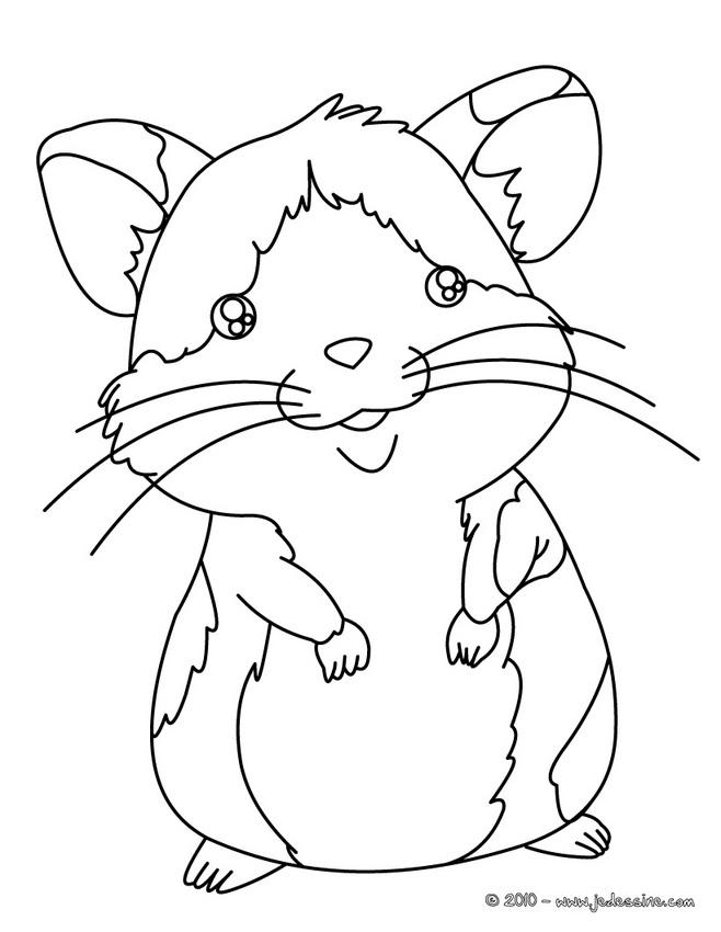 Coloriages à imprimer : Hamster, numéro : 17097