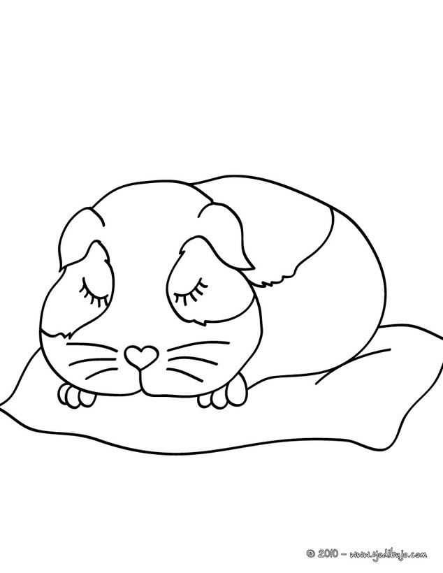 Coloriages à imprimer : Hamster, numéro : 17112