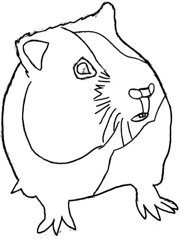 Coloriages à imprimer : Hamster, numéro : 27874