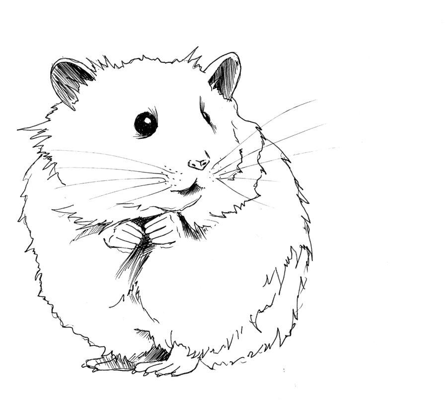 Coloriages à imprimer : Hamster, numéro : 3416