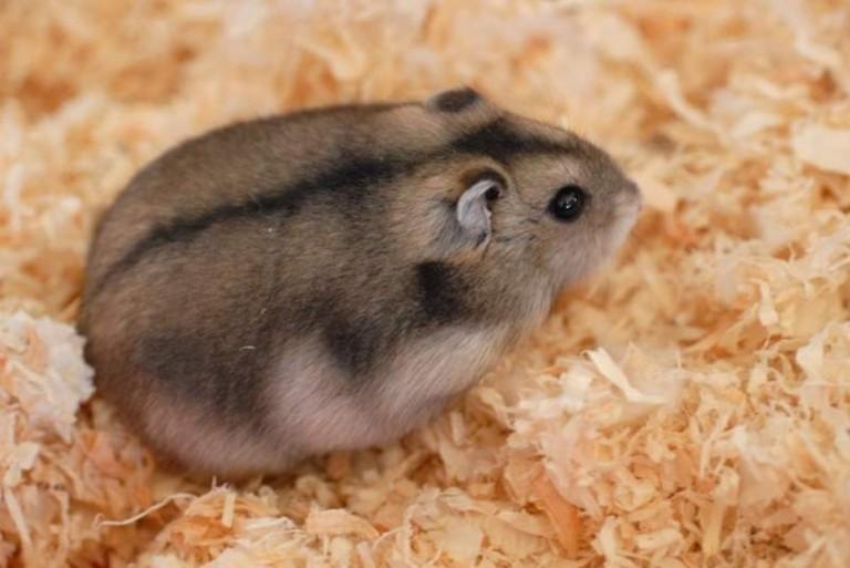 Dessins En Couleurs A Imprimer Hamster Numero 683415