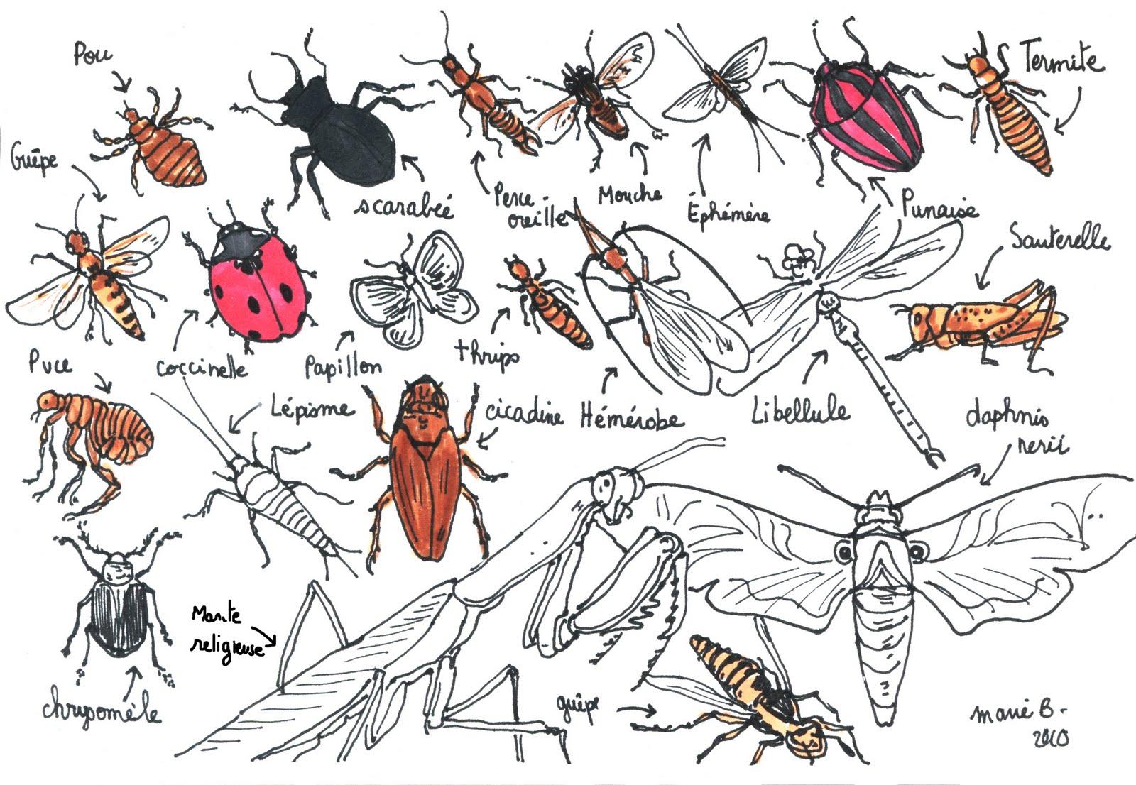Dessins En Couleurs A Imprimer Insectes Numero 197757