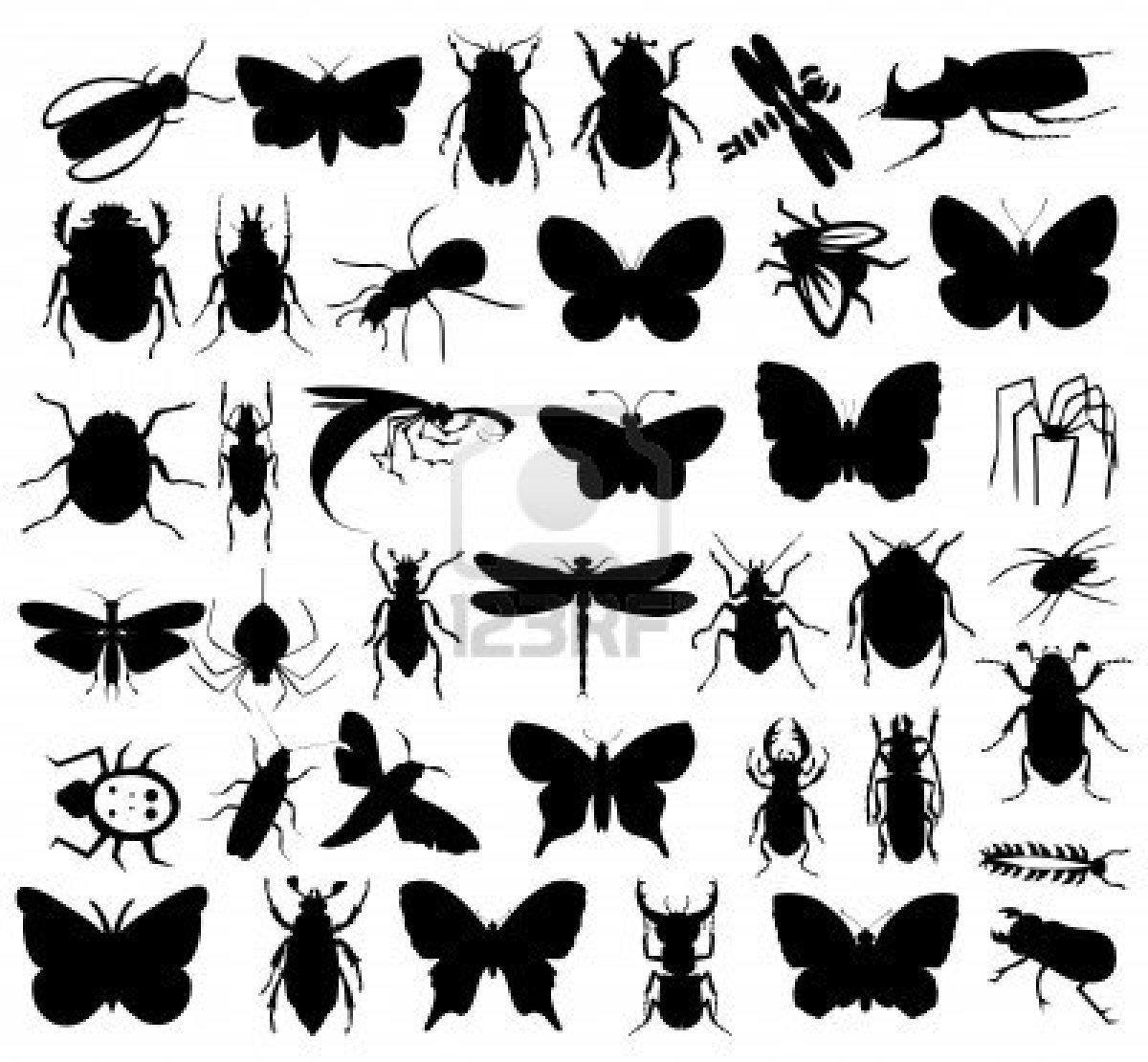 Coloriages à imprimer : Insectes, numéro : 200864