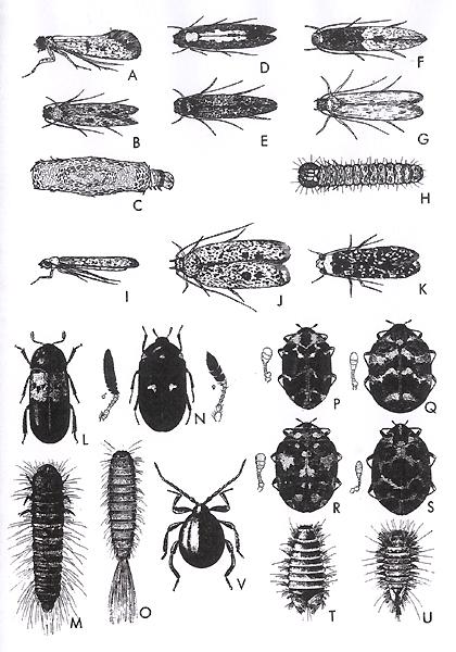 Dessins en couleurs imprimer insectes num ro 22489 - Dessin d insectes a imprimer ...