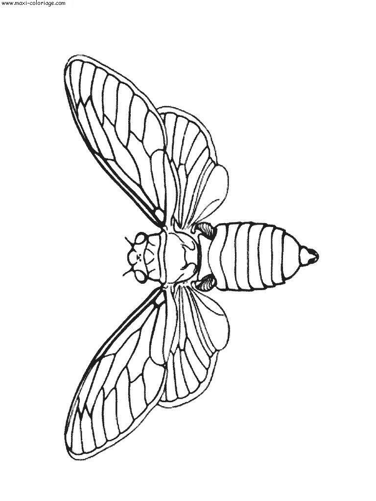 Coloriages à imprimer : Insectes, numéro : 23808