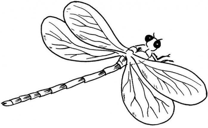 Coloriages à imprimer : Insectes, numéro : 23817