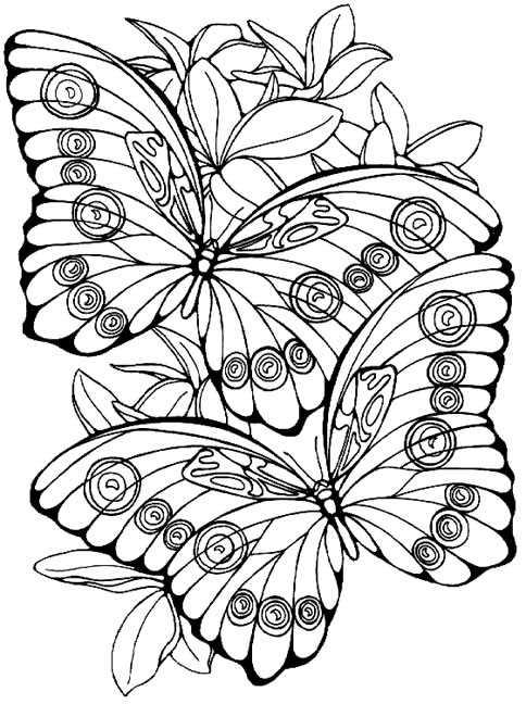 Coloriages à imprimer : Insectes, numéro : 25659