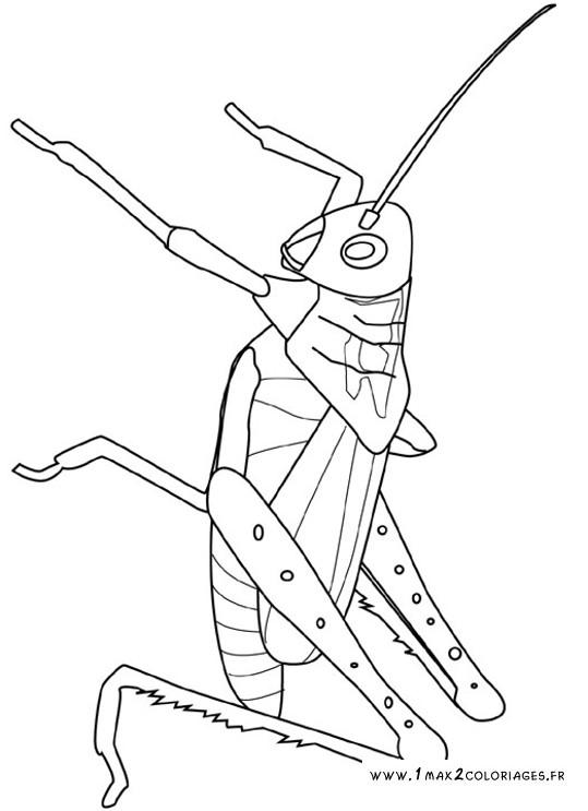 Coloriages à imprimer : Insectes, numéro : 25661