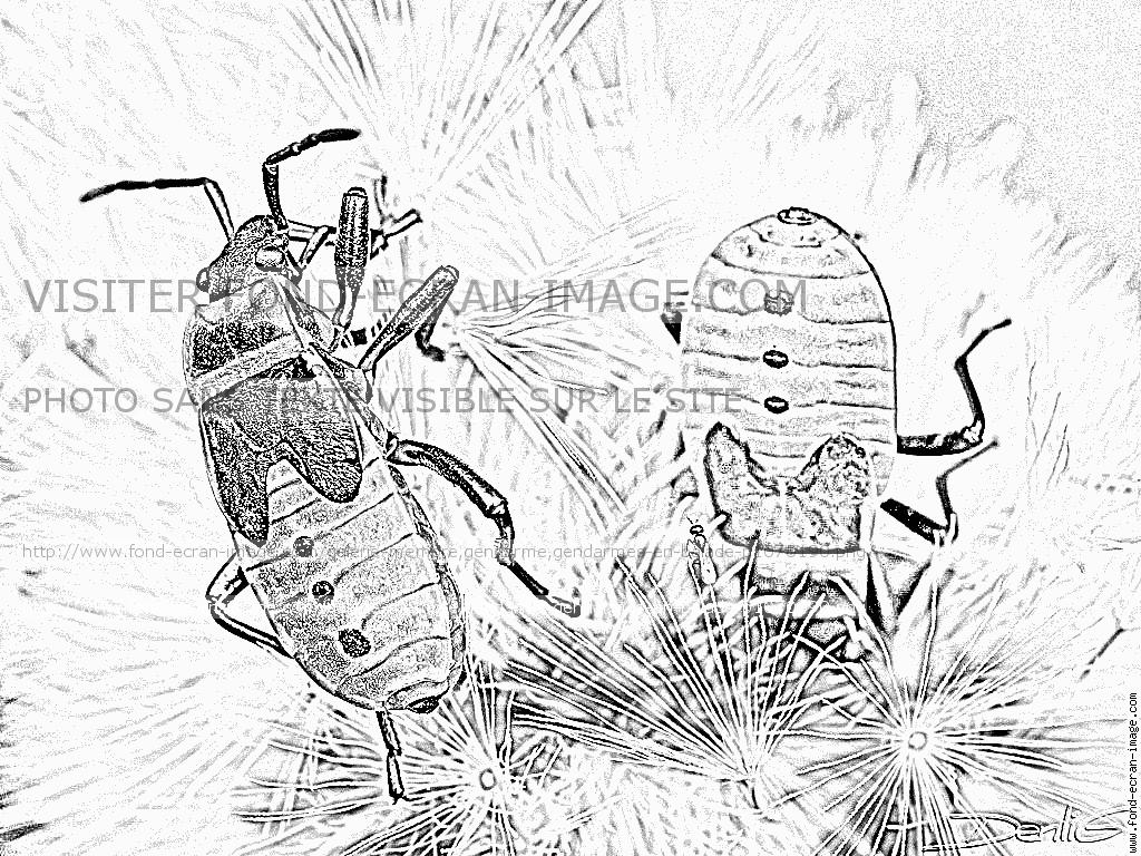Coloriages à imprimer : Insectes, numéro : 487819
