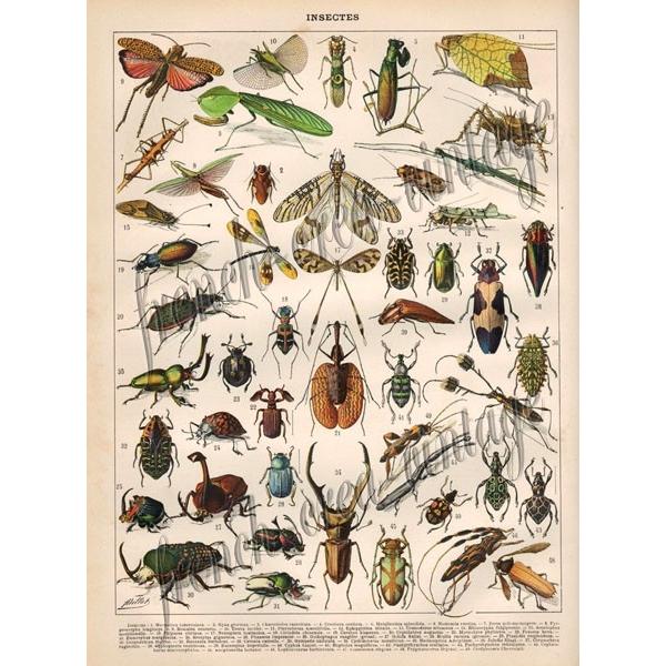 Dessins en couleurs imprimer insectes num ro 493119 - Dessin d insectes a imprimer ...