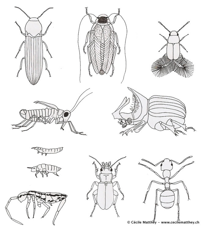 Insectes dessin - Coloriage insecte ...