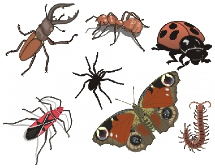 Dessins en couleurs imprimer insectes num ro 73915 - Dessin d insectes a imprimer ...