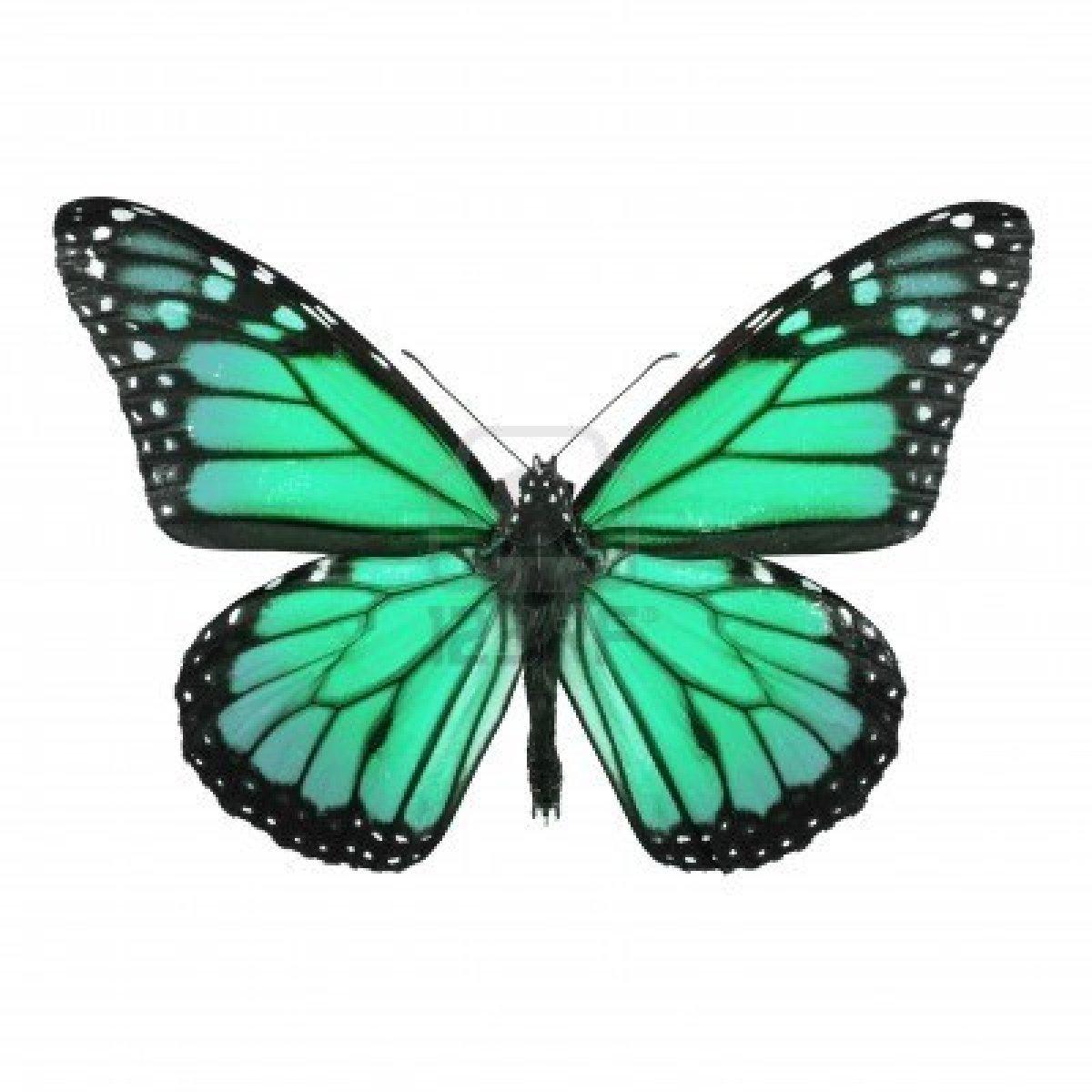 Super en couleurs à imprimer : Animaux - Insectes - Papillon numéro 158552 MN91