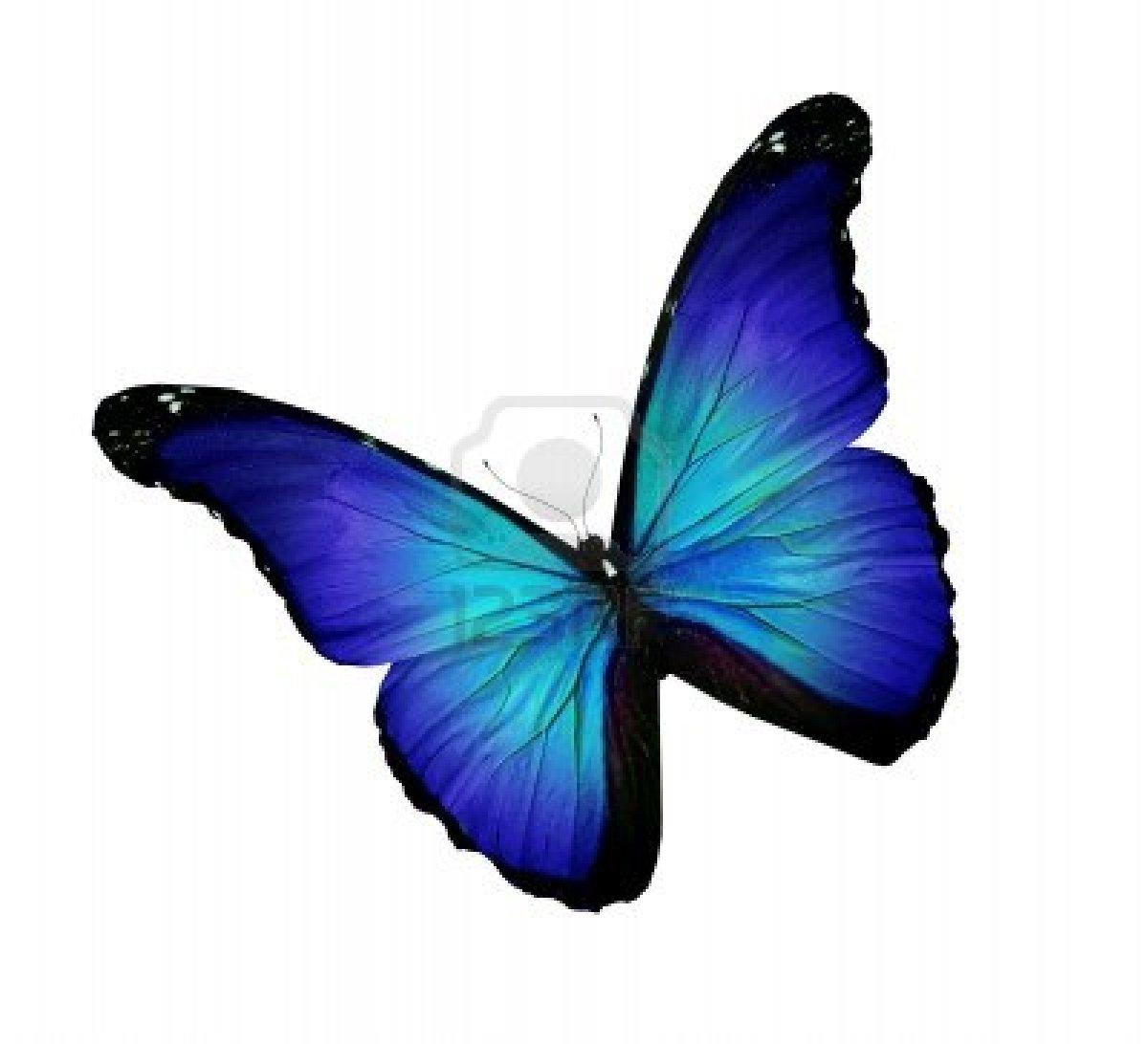 en couleurs à imprimer animaux insectes papillon numéro 158554