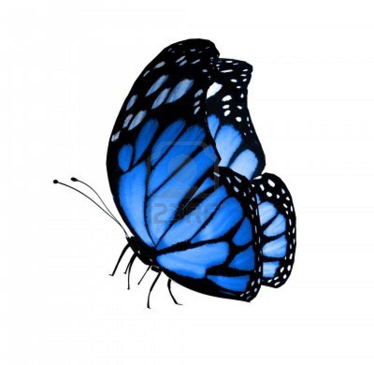 Dessins En Couleurs à Imprimer Papillon Numéro 158556