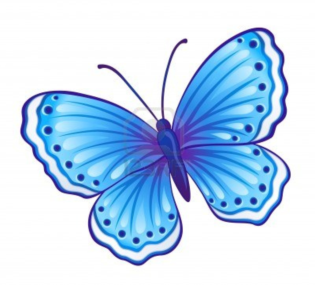 how to draw a blue butterfly