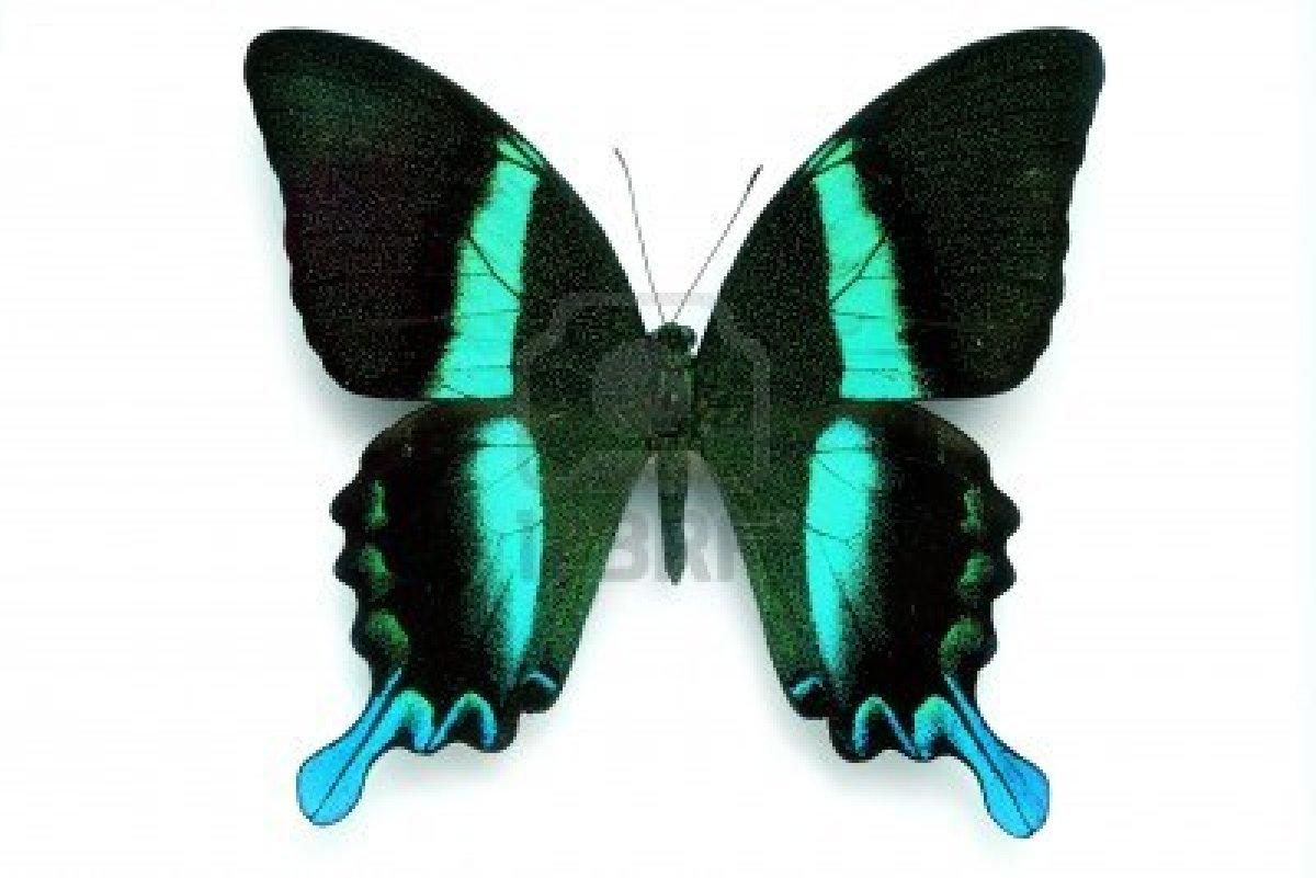 Dessins en couleurs imprimer papillon num ro 158559 - Papillon imprimer ...