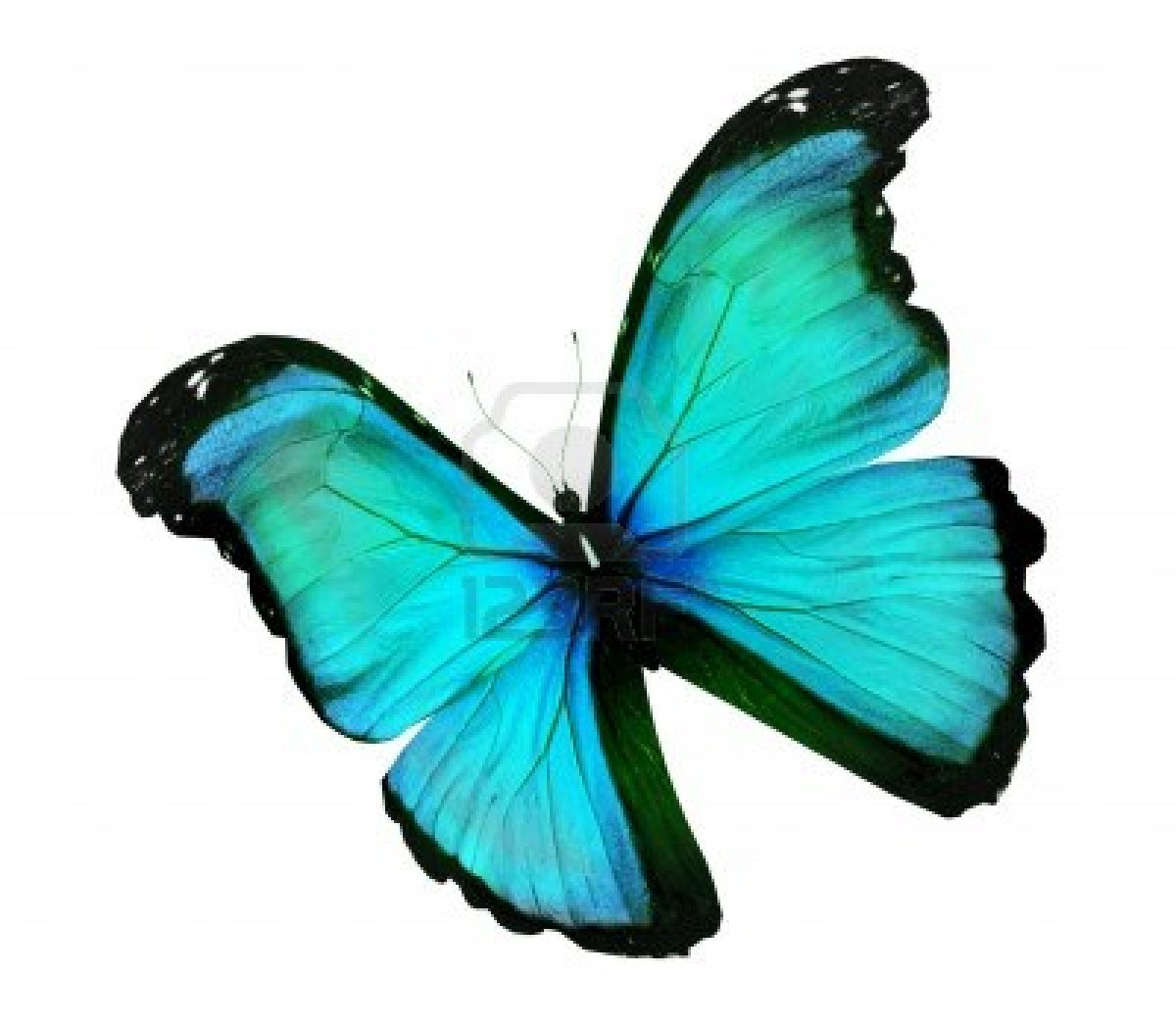 papillon bleu dessin images galleries with a bite. Black Bedroom Furniture Sets. Home Design Ideas