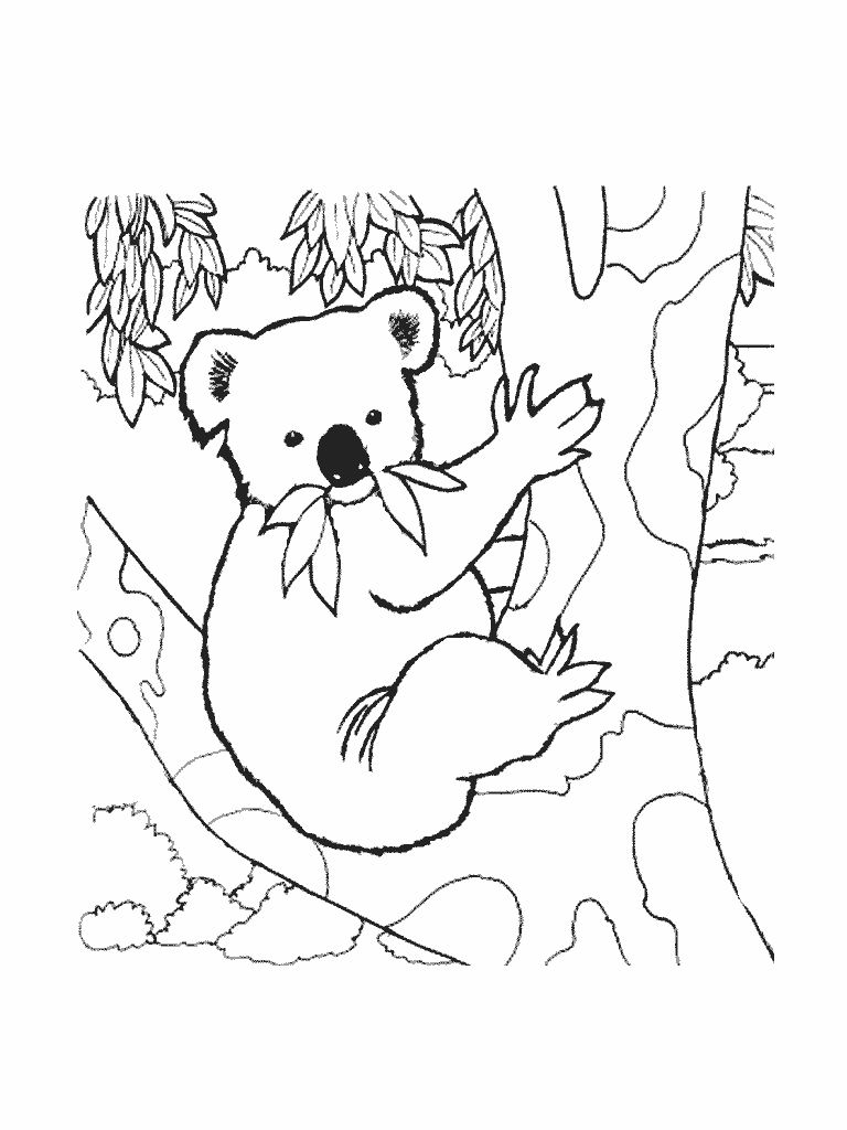 Coloriages à imprimer : Koala, numéro : 5a72fa2e