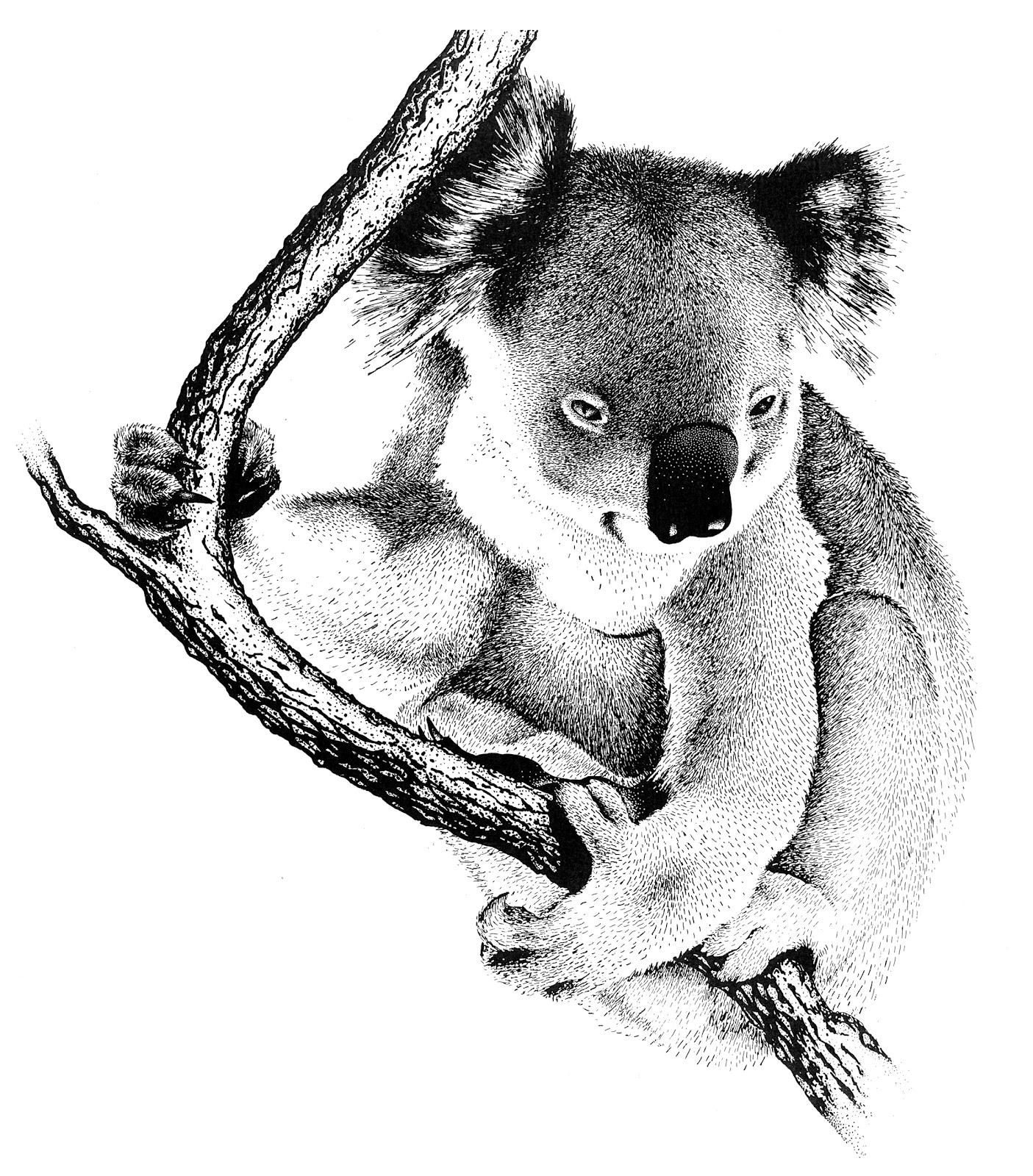 Coloriages à imprimer : Koala, numéro : 603439