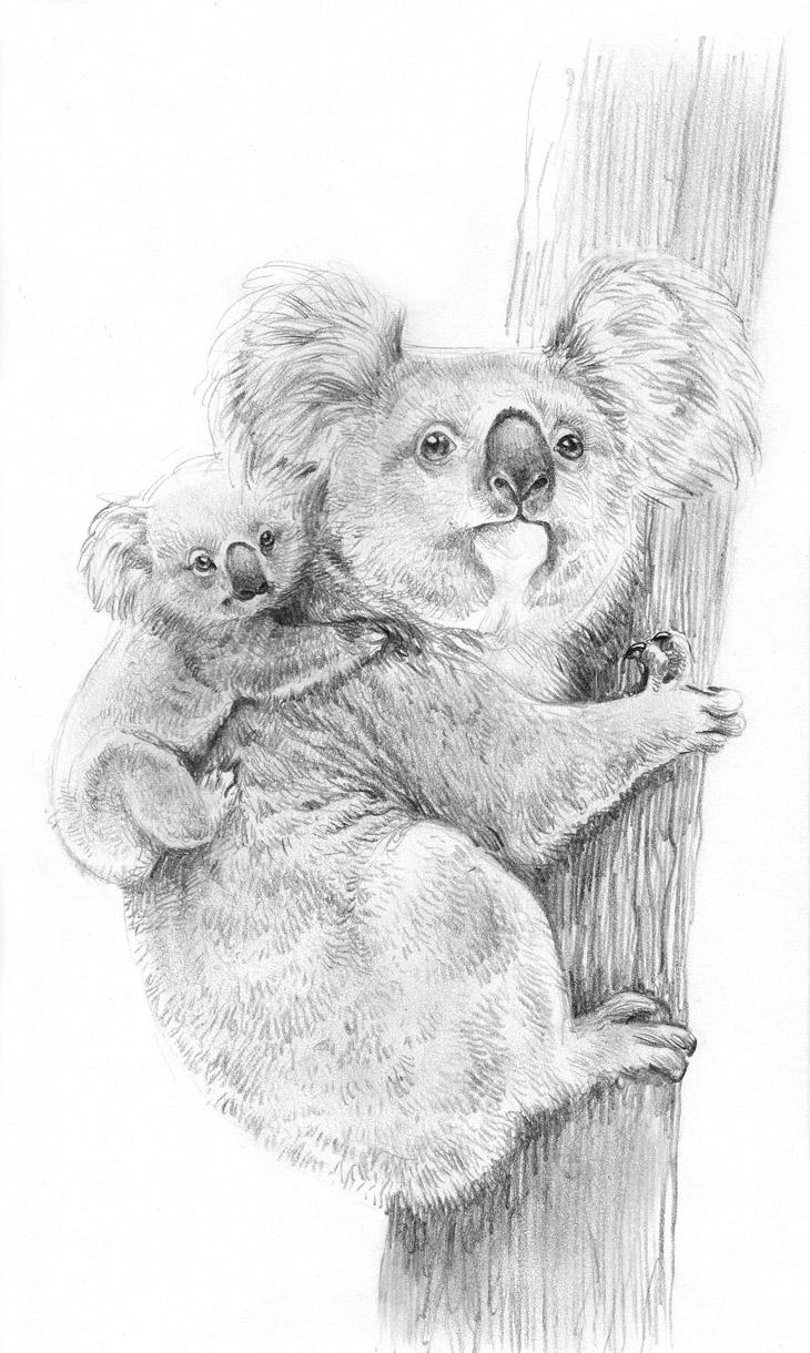 Coloriages à imprimer : Koala, numéro : 603440