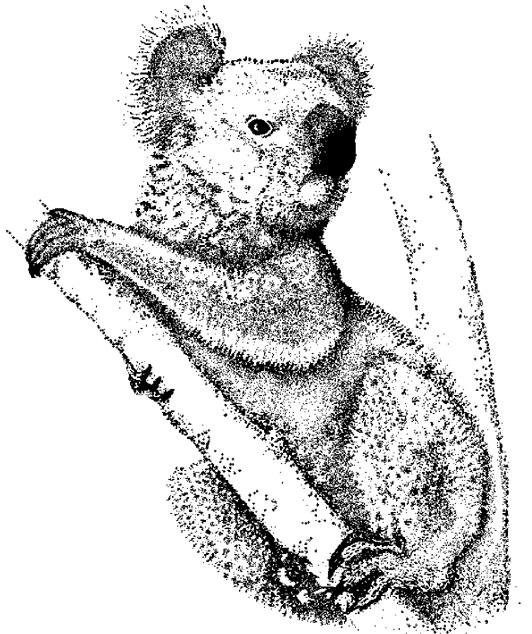 Coloriages à imprimer : Koala, numéro : 624739