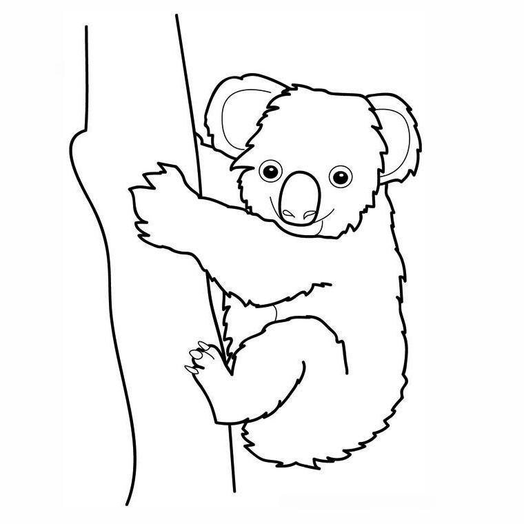 Coloriages à imprimer : Koala, numéro : 754164