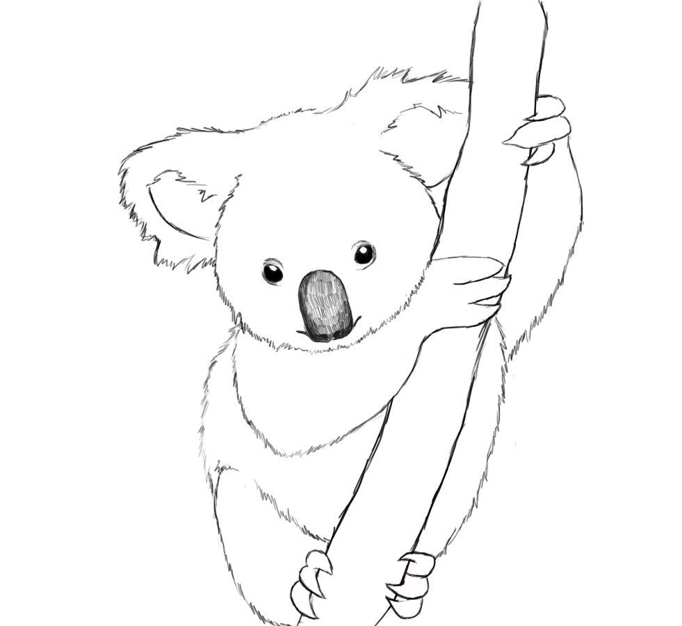 Coloriages à imprimer : Koala, numéro : d84f2d6d