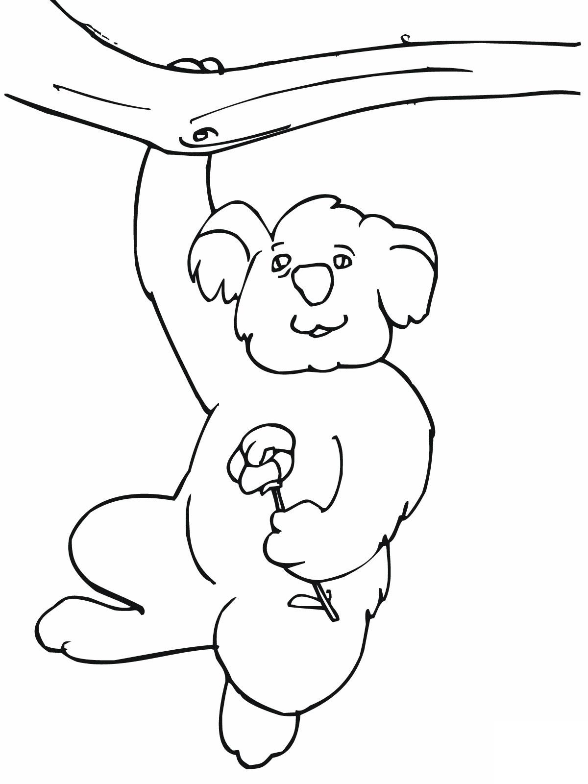 Coloriages à imprimer : Koala, numéro : efab27e8