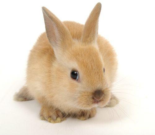Dessins en couleurs imprimer lapin num ro 117472 - Photo de lapin a imprimer ...