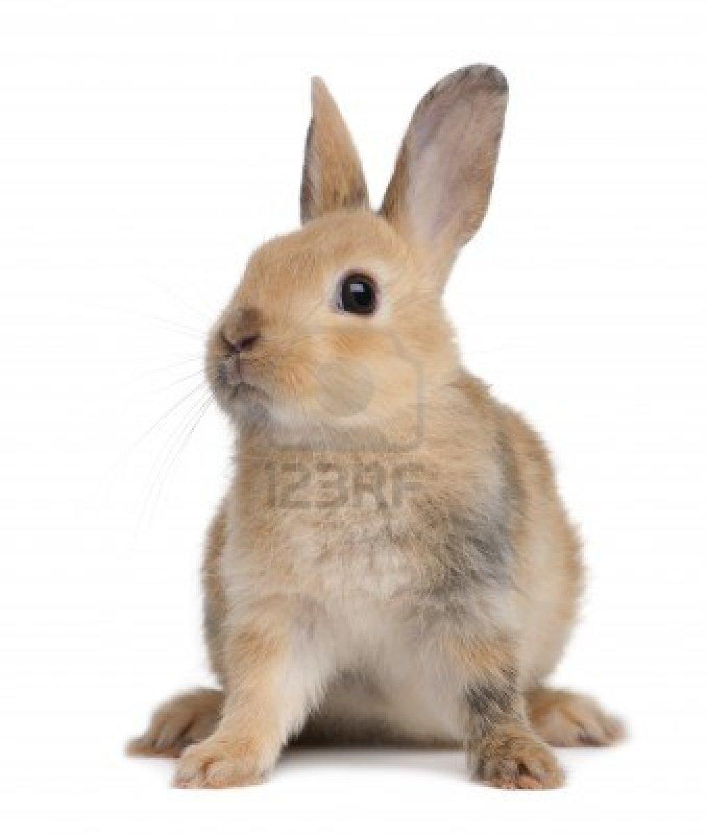 Dessins en couleurs imprimer lapin num ro 207302 - Animaux a imprimer en couleur ...
