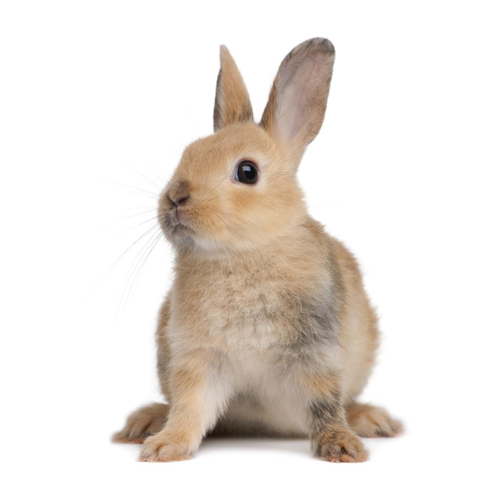Dessins en couleurs imprimer lapin num ro 300682 - Photo de lapin a imprimer ...