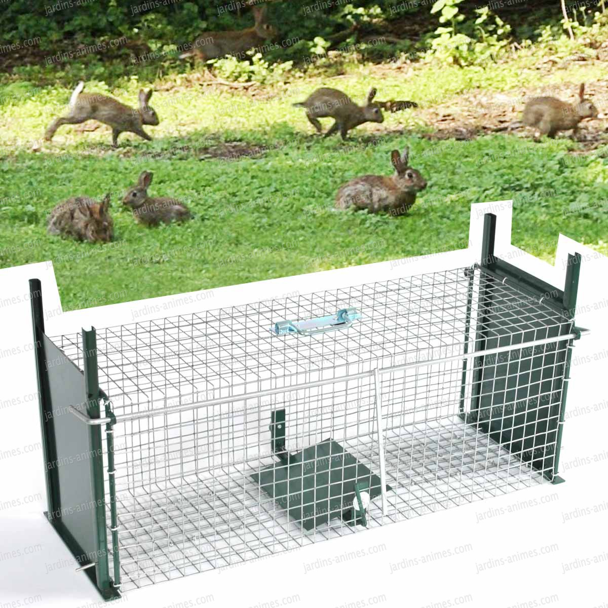 Dessin en couleurs imprimer animaux lapin num ro 466150 for Anti fouine maison