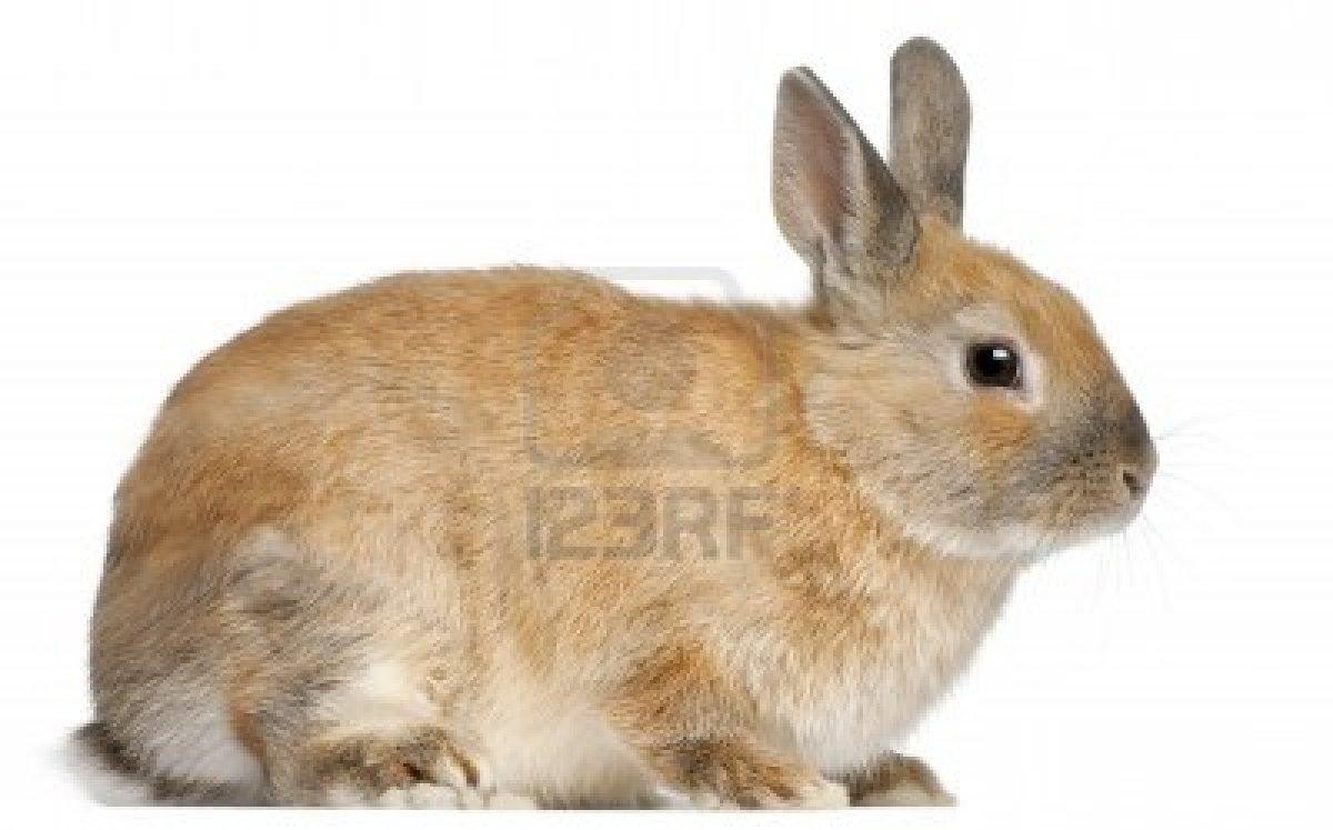 Dessins en couleurs imprimer lapin num ro 70098 - Photo de lapin a imprimer ...