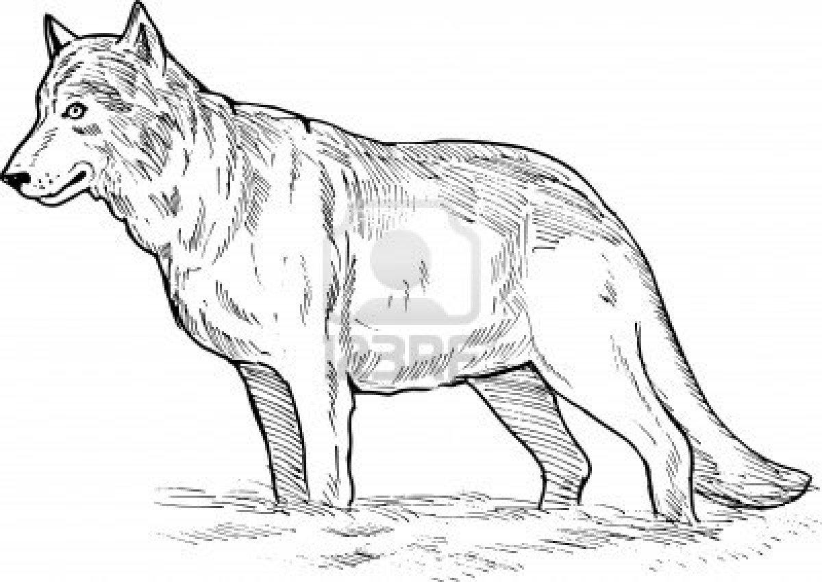 Coloriages à imprimer : Loup, numéro : 113475