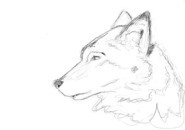 Coloriage imprimer animaux loup num ro 3997 - Tete de loup dessin ...