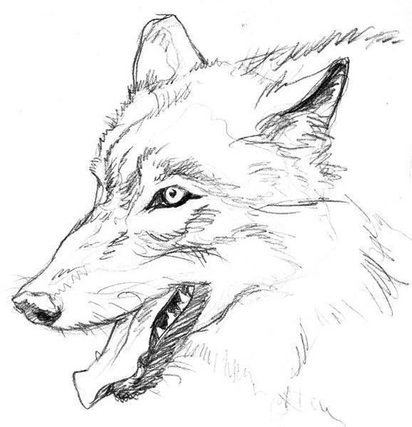 Coloriage imprimer animaux loup num ro 4012 - Tete de loup dessin ...