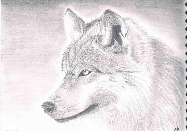 Animaux manga recherche google dessins t loups - Tete de loup dessin ...