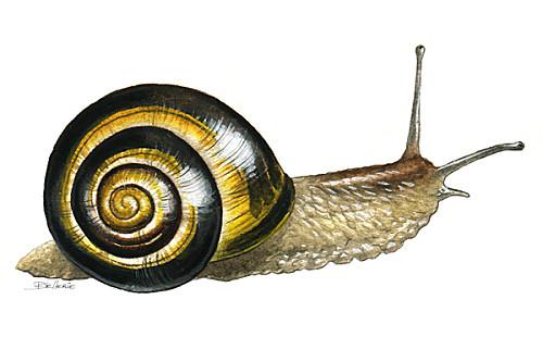 Dessin en couleurs imprimer animaux mollusques escargot num ro 396264 - Animaux a imprimer en couleur ...