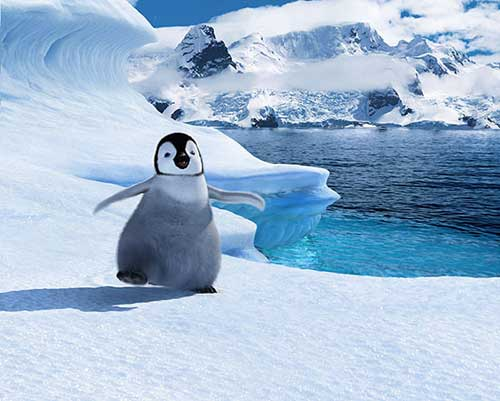 Dessins en couleurs à imprimer : Pinguoin, numéro : 621710