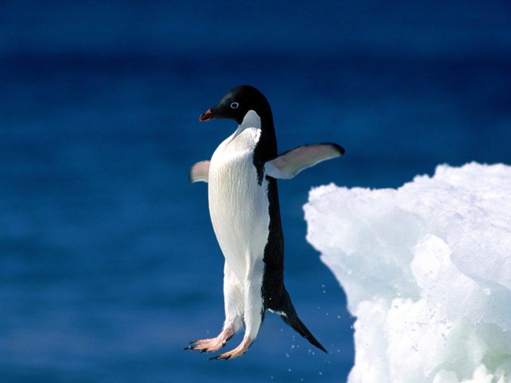 Dessins en couleurs à imprimer : Pinguoin, numéro : 683104