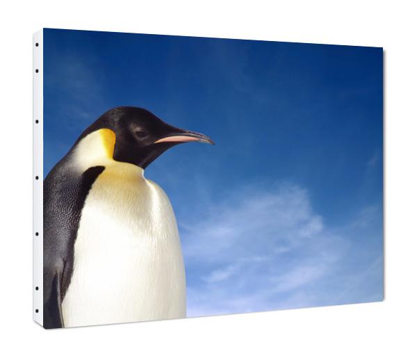 Dessins en couleurs à imprimer : Pinguoin, numéro : 683111