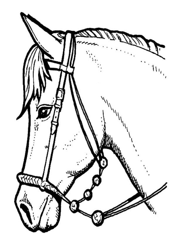 Coloriages imprimer poney num ro 3737 - Dessin tete de cheval ...