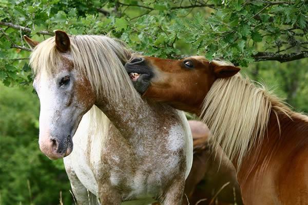 Dessins en couleurs imprimer poney num ro 683406 - Dessin anime avec des poneys ...