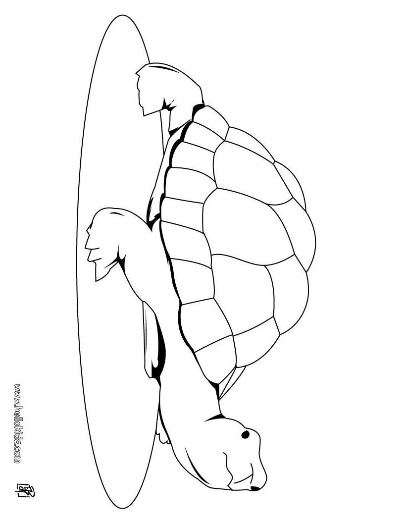 Coloriages à imprimer : Reptiles, numéro : 23984